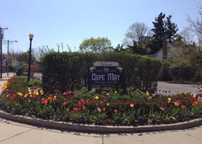 Cape May Spring Tulips