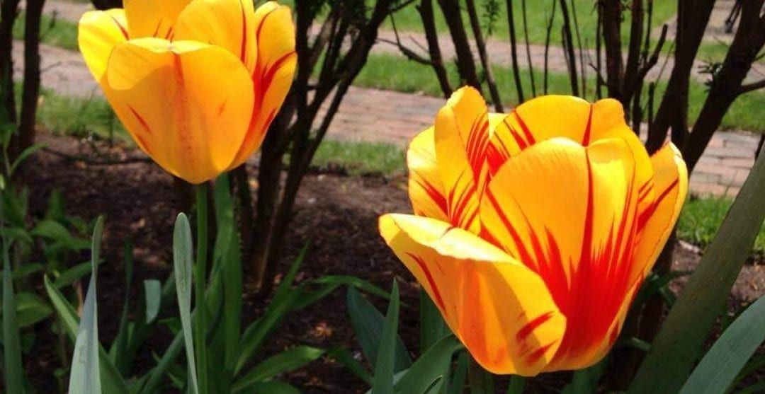 Book Your Cape May Spring Getaway and Save