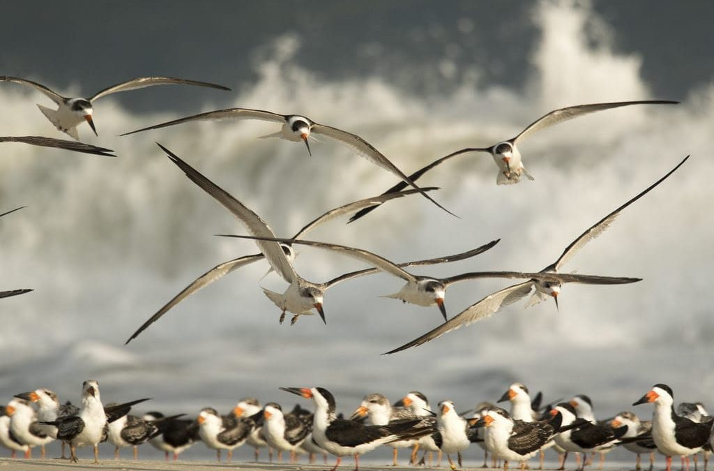 Things to do Outside in Cape May: Birding